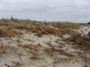 Long Beach Island winter dune grass
