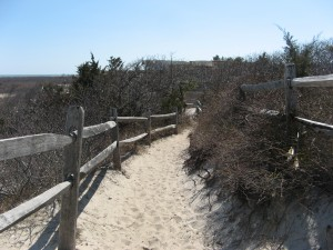 Barnegat Lighthouse Forest Trail