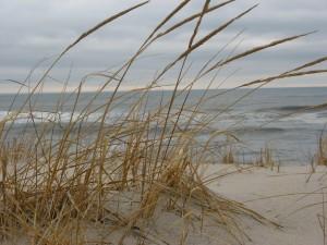 Long Beach Island dune grass